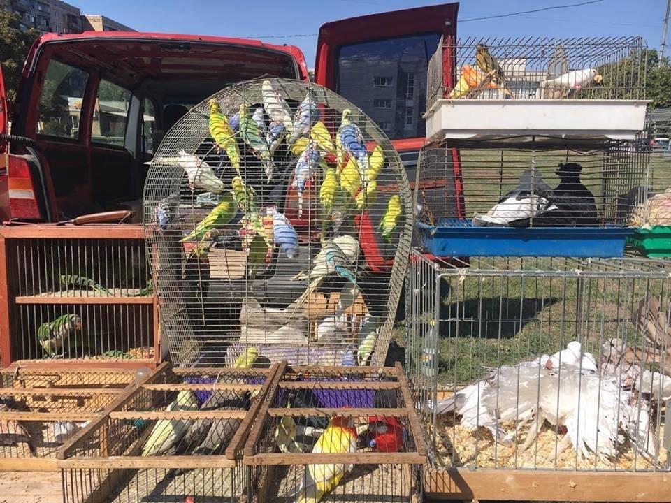 В Дружковке прошла региональная выставка-ярмарка птиц и кроликов, фото-1