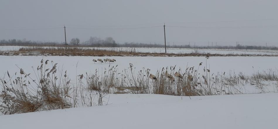 В Украине замерзают аисты , фото-1