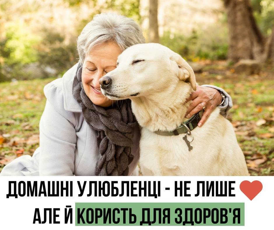 Котики і собачки можуть покращувати здоров'я. Уляна Супрун розказала про користь домашніх тварин, фото-1