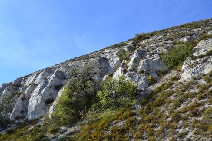 Куда поехать на выходные. Птичий двор, Сад Бернацкого и меловые горы Краматорска, фото-14