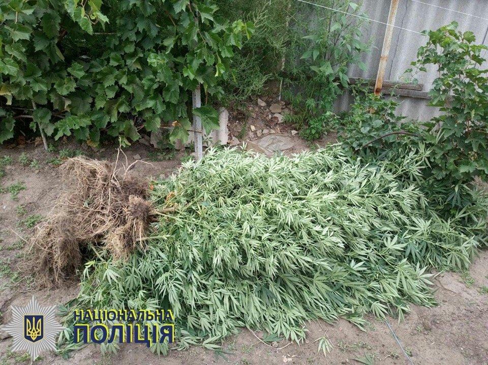 В Олексієво-Дружківці поліція припинила діяльність «наркоаграрія», фото-2
