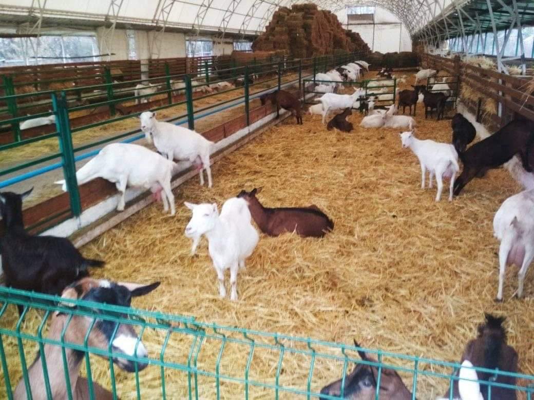 Приятное с полезным: Дружковские школьники посетили уникальную ферму и обогатились знаниями (ФОТО), фото-3