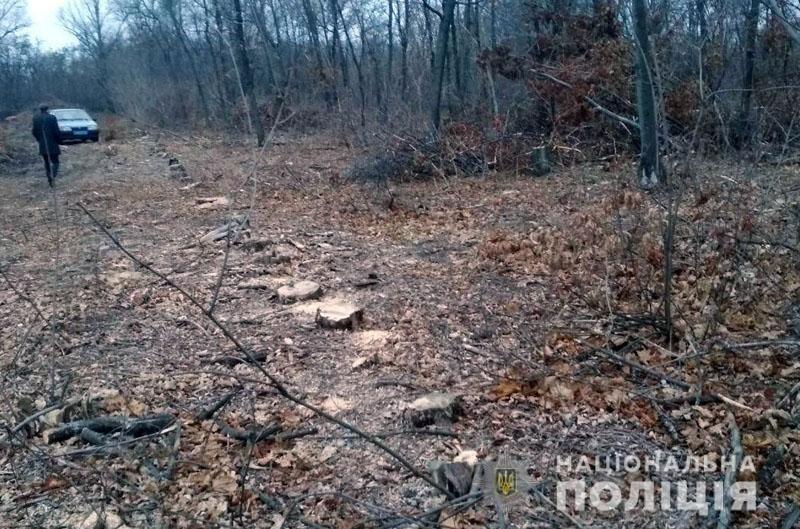 Житель Дружковки купил у «чёрных лесорубов» незаконно спиленные деревья. Их пришлось вернуть (ФОТО), фото-2