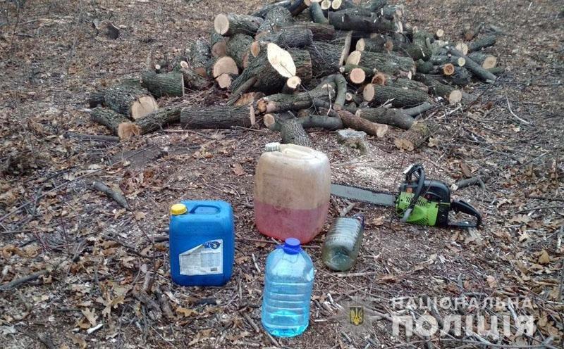 Житель Дружковки купил у «чёрных лесорубов» незаконно спиленные деревья. Их пришлось вернуть (ФОТО), фото-1