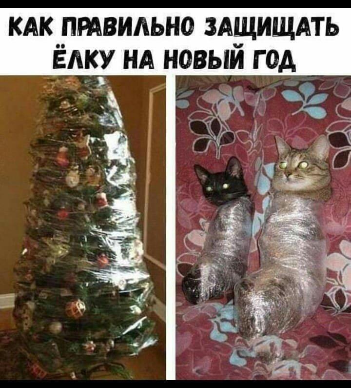 Без кота и жизнь не та. Подборка смешных картинок с котиками, фото-12