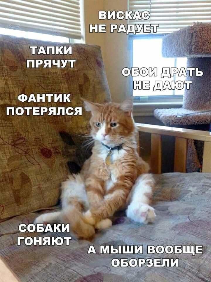 Без кота и жизнь не та. Подборка смешных картинок с котиками, фото-1