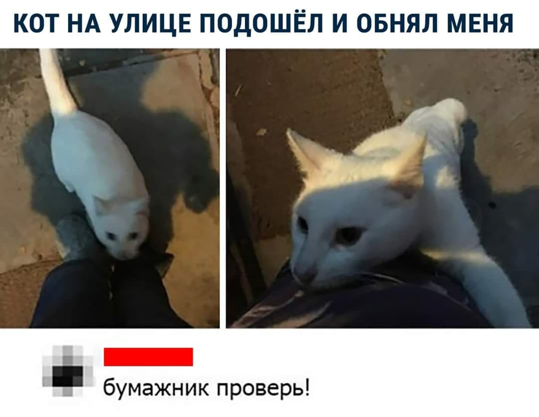 Без кота и жизнь не та. Подборка смешных картинок с котиками, фото-6