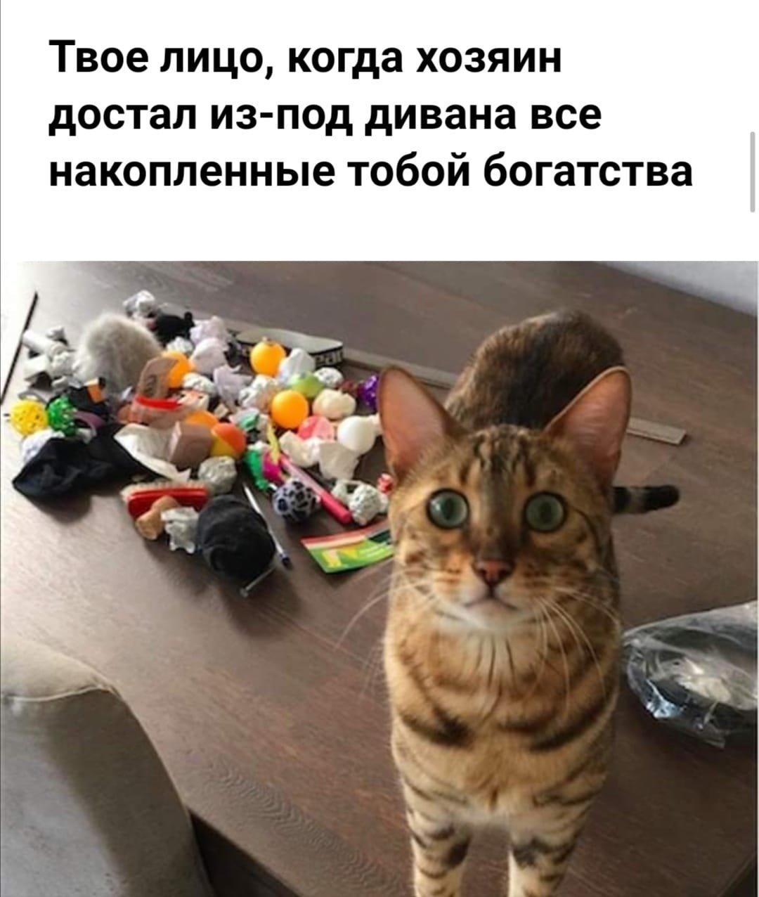 Без кота и жизнь не та. Подборка смешных картинок с котиками, фото-4