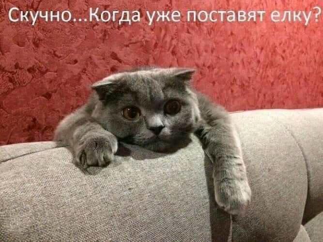 Без кота и жизнь не та. Подборка смешных картинок с котиками, фото-9