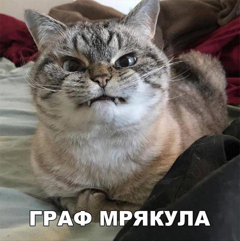 Без кота и жизнь не та. Подборка смешных картинок с котиками, фото-17