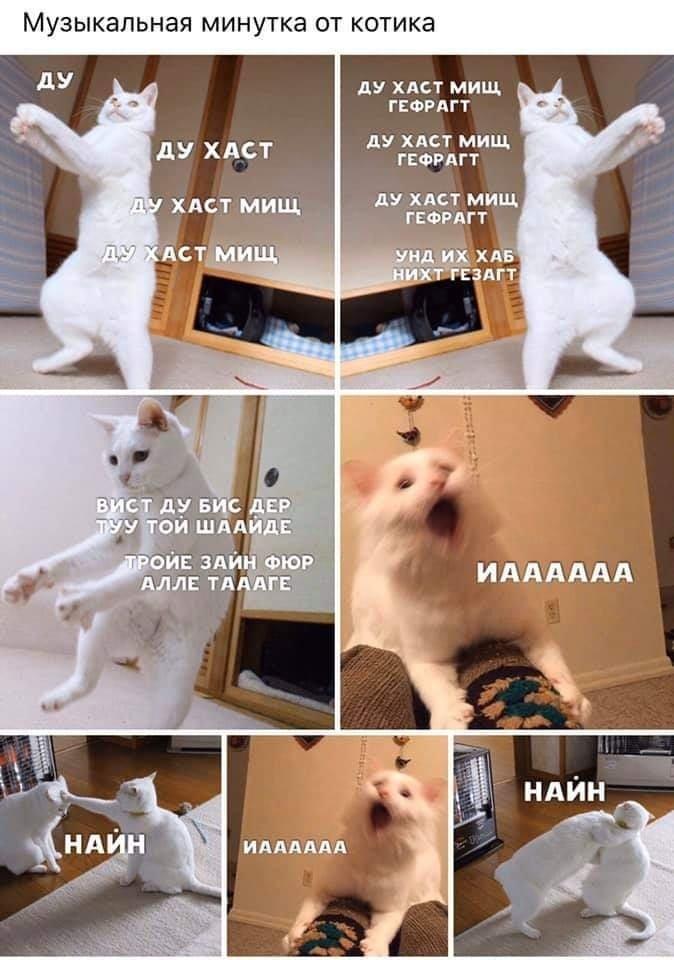 Без кота и жизнь не та. Подборка смешных картинок с котиками, фото-18
