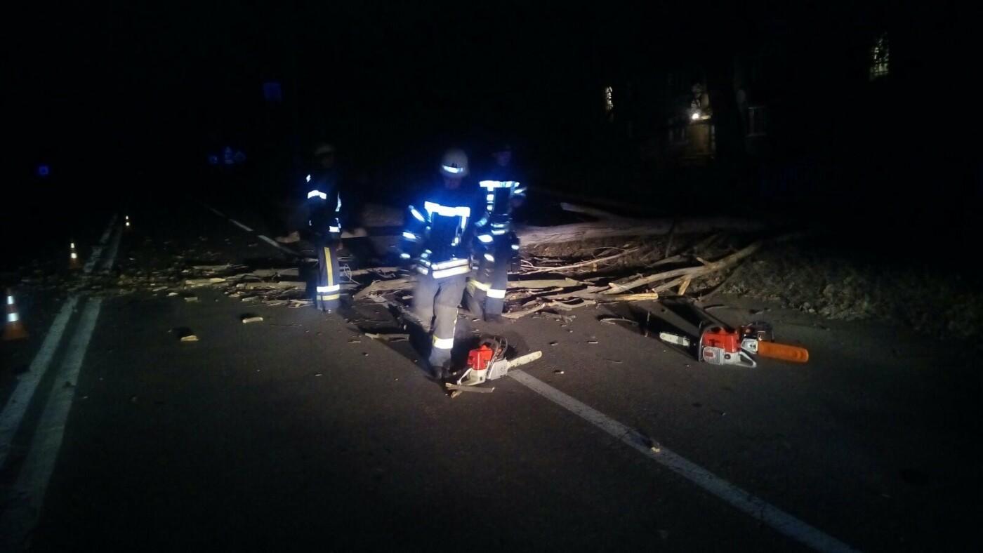 Буйство стихии: В Дружковке сильный ветер повалил деревья (ФОТО), фото-1