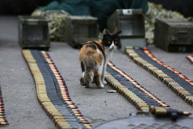 Військові та їх чотирьохлапі друзі. Котики ЗСУ і не тільки, фото-5