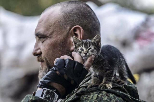 Військові та їх чотирьохлапі друзі. Котики ЗСУ і не тільки, фото-1