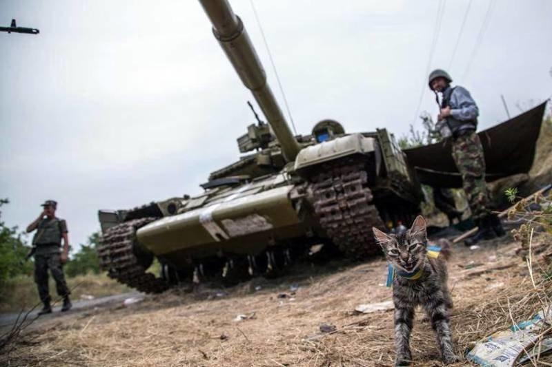 Військові та їх чотирьохлапі друзі. Котики ЗСУ і не тільки, фото-15
