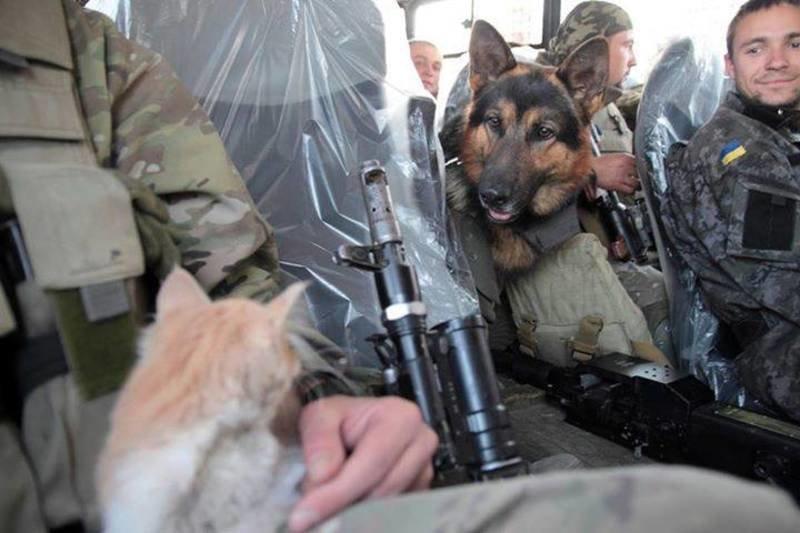 Військові та їх чотирьохлапі друзі. Котики ЗСУ і не тільки, фото-10