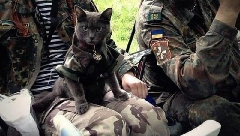 Військові та їх чотирьохлапі друзі. Котики ЗСУ і не тільки, фото-7