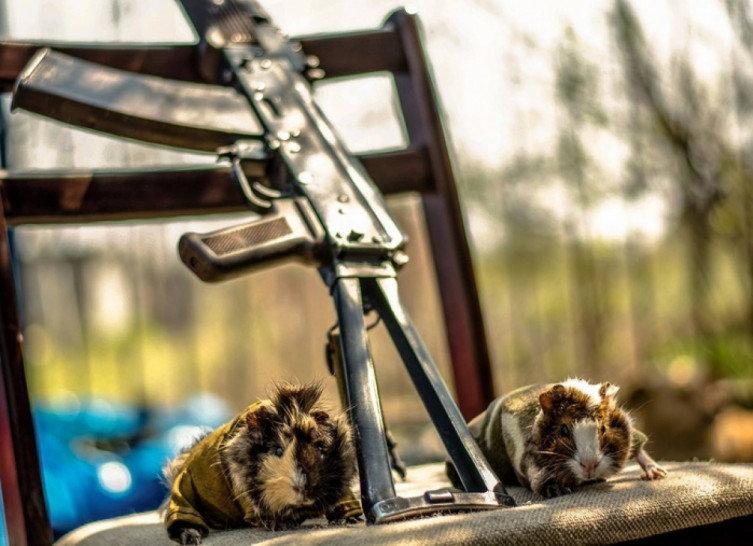 Військові та їх чотирьохлапі друзі. Котики ЗСУ і не тільки, фото-17
