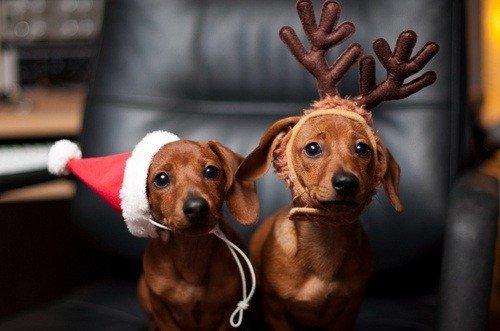 Тваринки і ялинки. Смішні новорічні картинки з котиками та собачками, фото-14