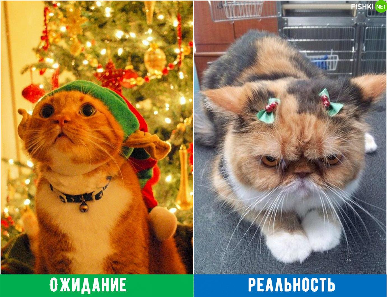 Тваринки і ялинки. Смішні новорічні картинки з котиками та собачками, фото-2