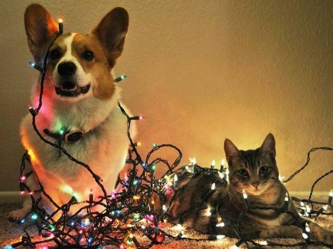 Тваринки і ялинки. Смішні новорічні картинки з котиками та собачками, фото-8