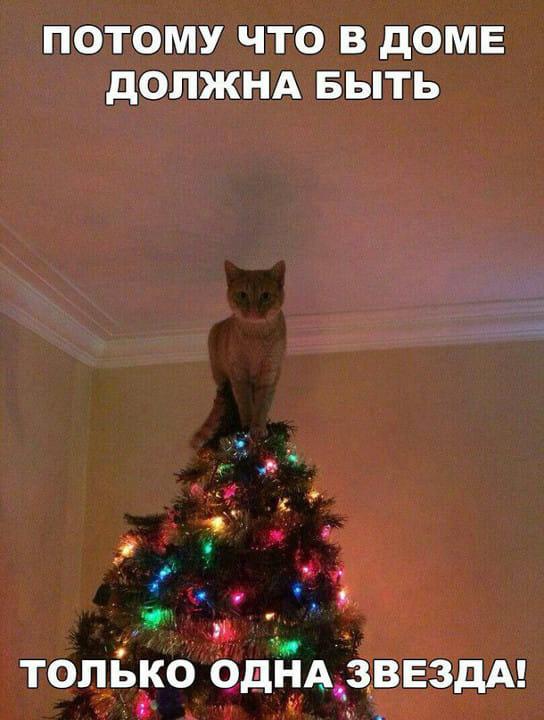 Тваринки і ялинки. Смішні новорічні картинки з котиками та собачками, фото-1