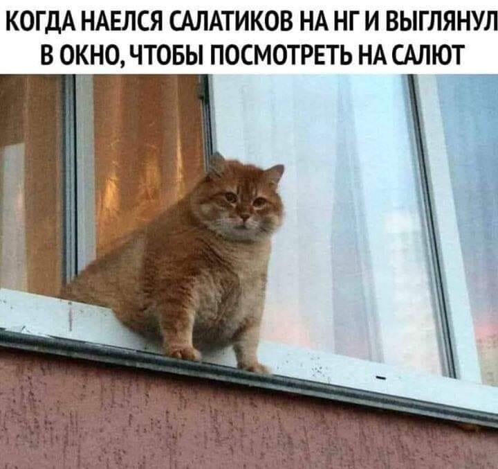 Тваринки і ялинки. Смішні новорічні картинки з котиками та собачками, фото-4