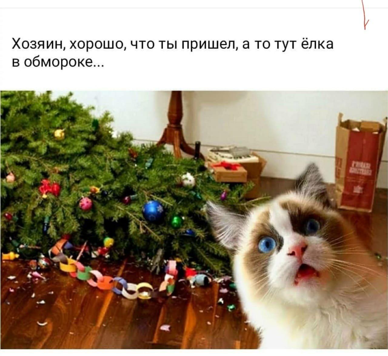 Тваринки і ялинки. Смішні новорічні картинки з котиками та собачками, фото-12