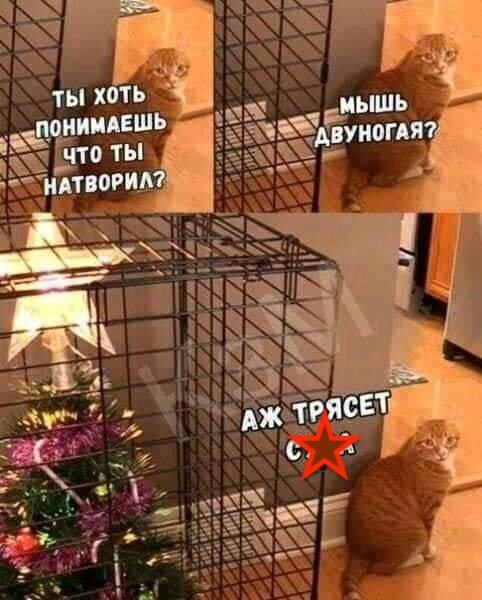 Тваринки і ялинки. Смішні новорічні картинки з котиками та собачками, фото-7