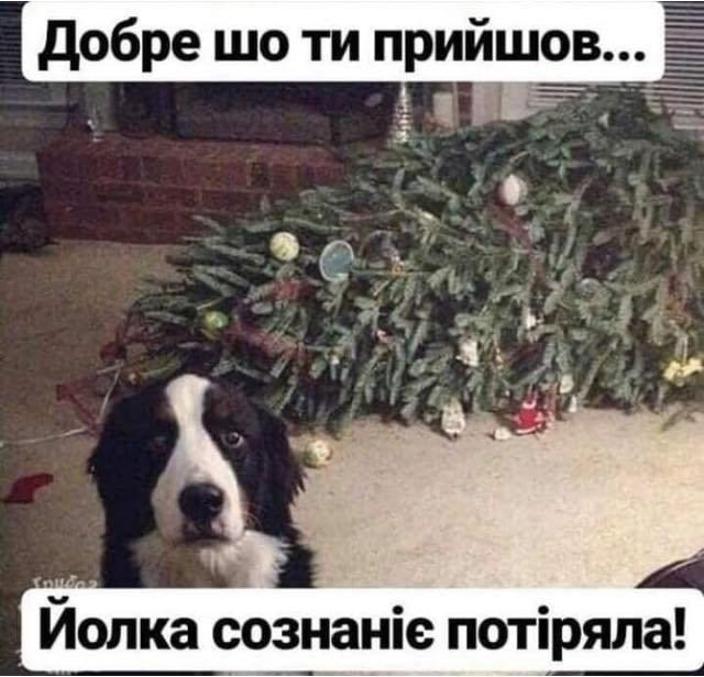 Тваринки і ялинки. Смішні новорічні картинки з котиками та собачками, фото-3