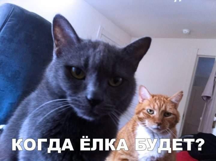 Тваринки і ялинки. Смішні новорічні картинки з котиками та собачками, фото-6