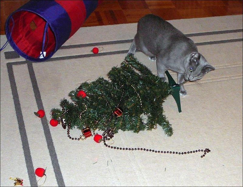 Тваринки і ялинки. Смішні новорічні картинки з котиками та собачками, фото-10