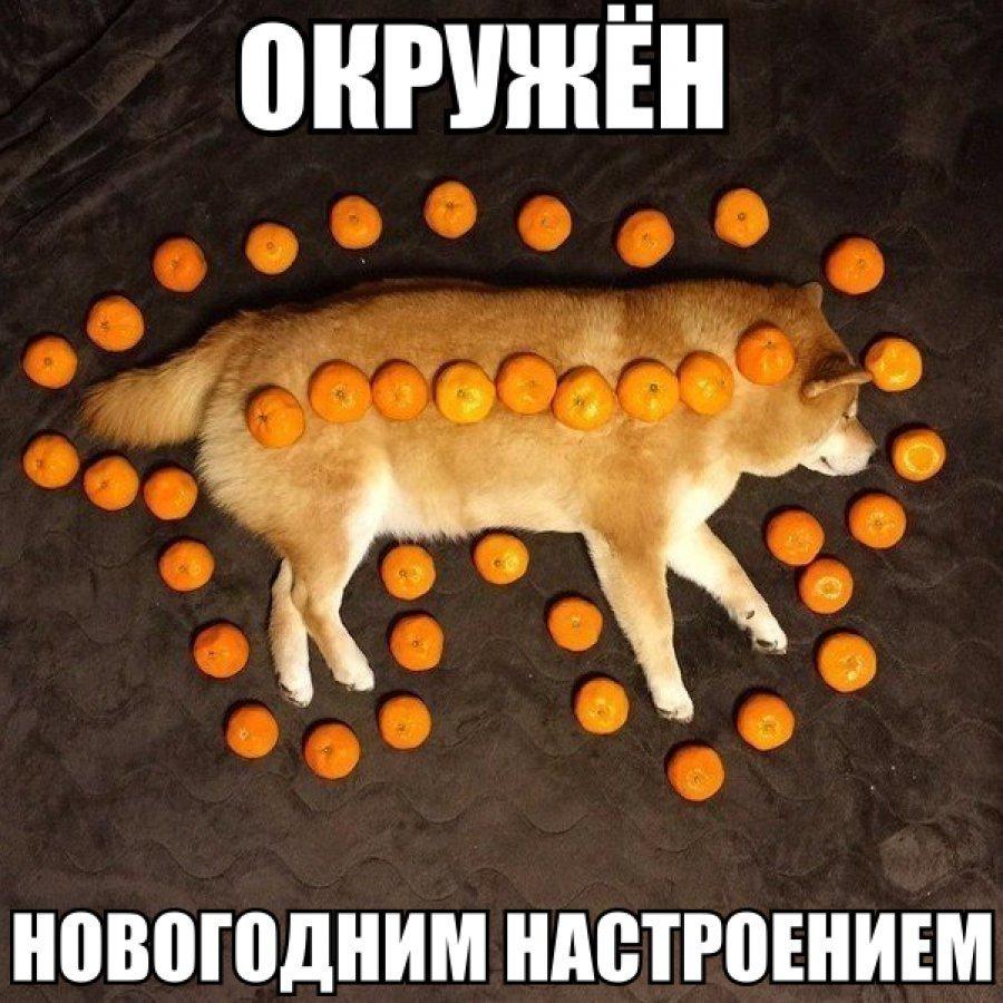 Тваринки і ялинки. Смішні новорічні картинки з котиками та собачками, фото-13