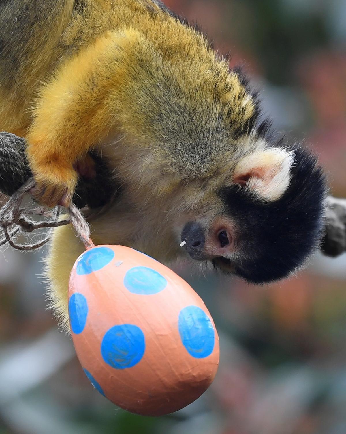 Як тваринки Великдень зустрічають. Підборка милих фото, фото-10