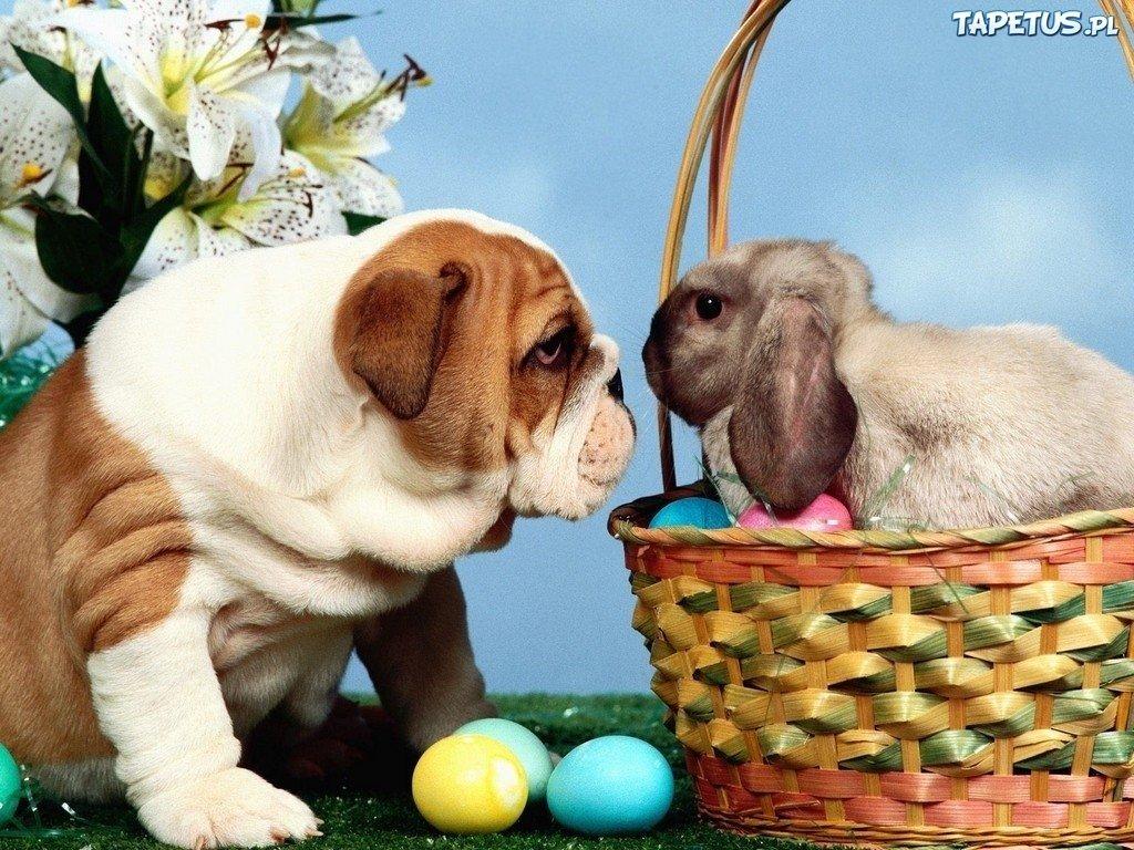 Як тваринки Великдень зустрічають. Підборка милих фото, фото-8