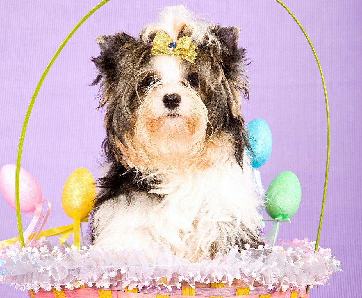 Як тваринки Великдень зустрічають. Підборка милих фото, фото-5