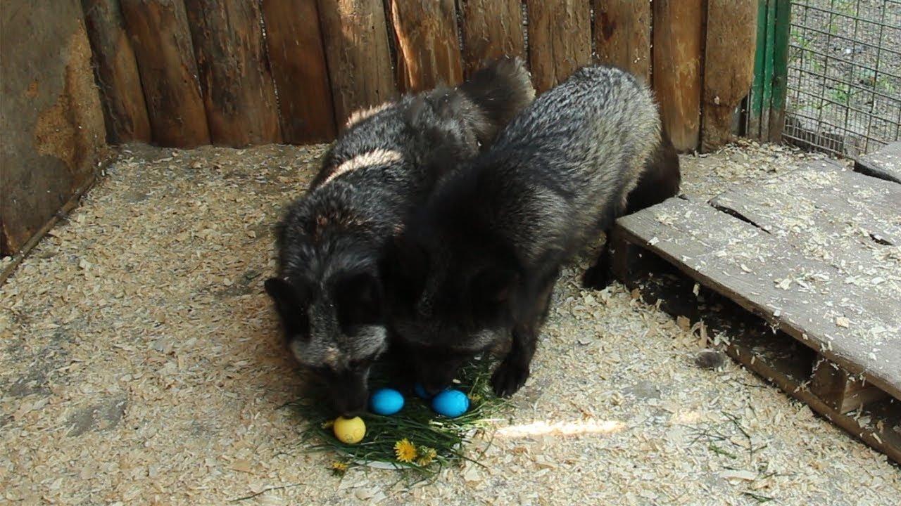 Як тваринки Великдень зустрічають. Підборка милих фото, фото-3