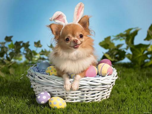 Як тваринки Великдень зустрічають. Підборка милих фото, фото-4