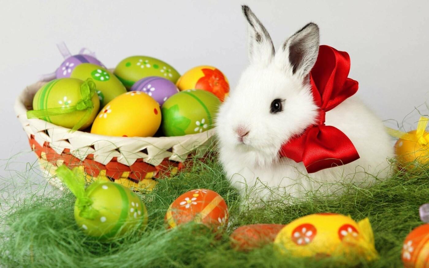 Як тваринки Великдень зустрічають. Підборка милих фото, фото-11