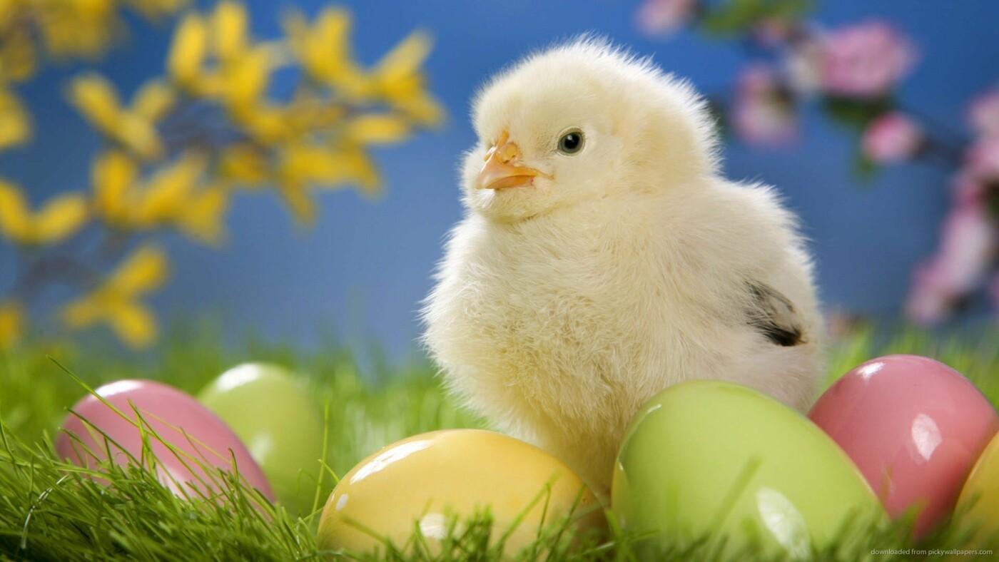 Як тваринки Великдень зустрічають. Підборка милих фото, фото-13