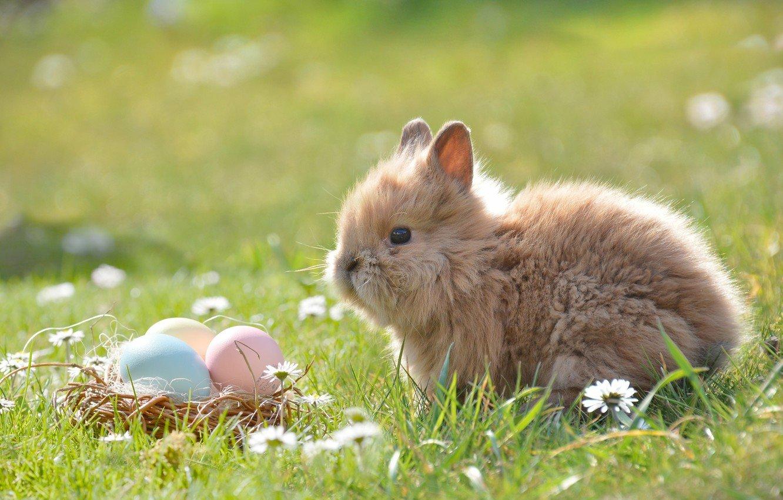 Як тваринки Великдень зустрічають. Підборка милих фото, фото-7
