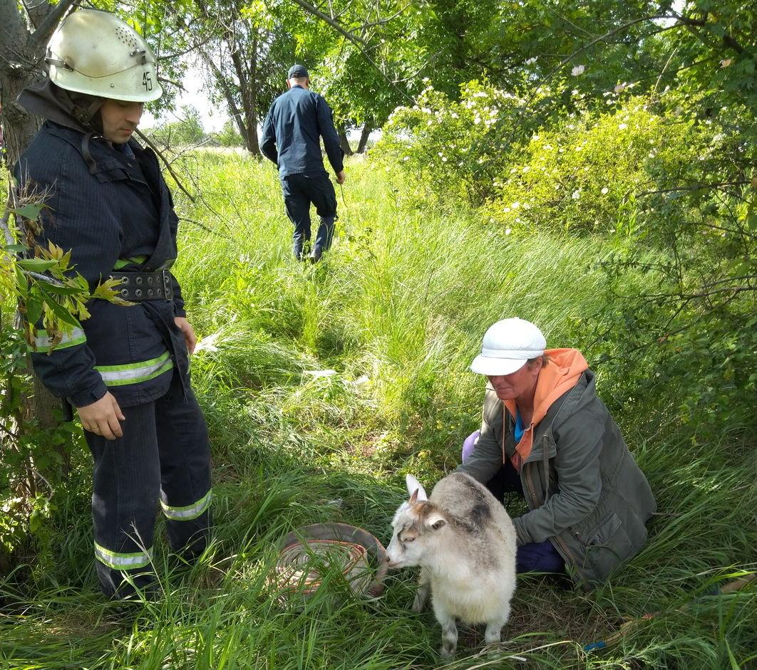 У Дружківці рятувальники дістали козеня з каналізаційного колодязя, фото-2