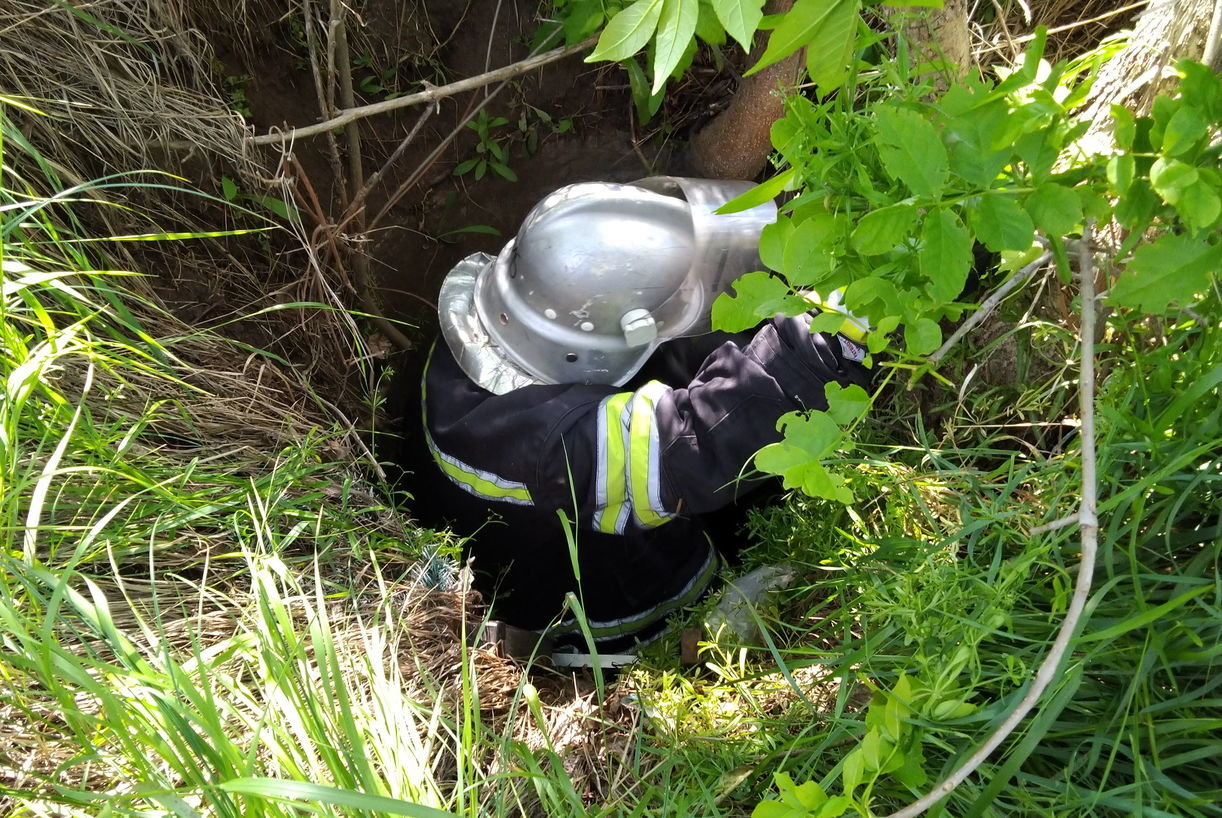 У Дружківці рятувальники дістали козеня з каналізаційного колодязя, фото-1