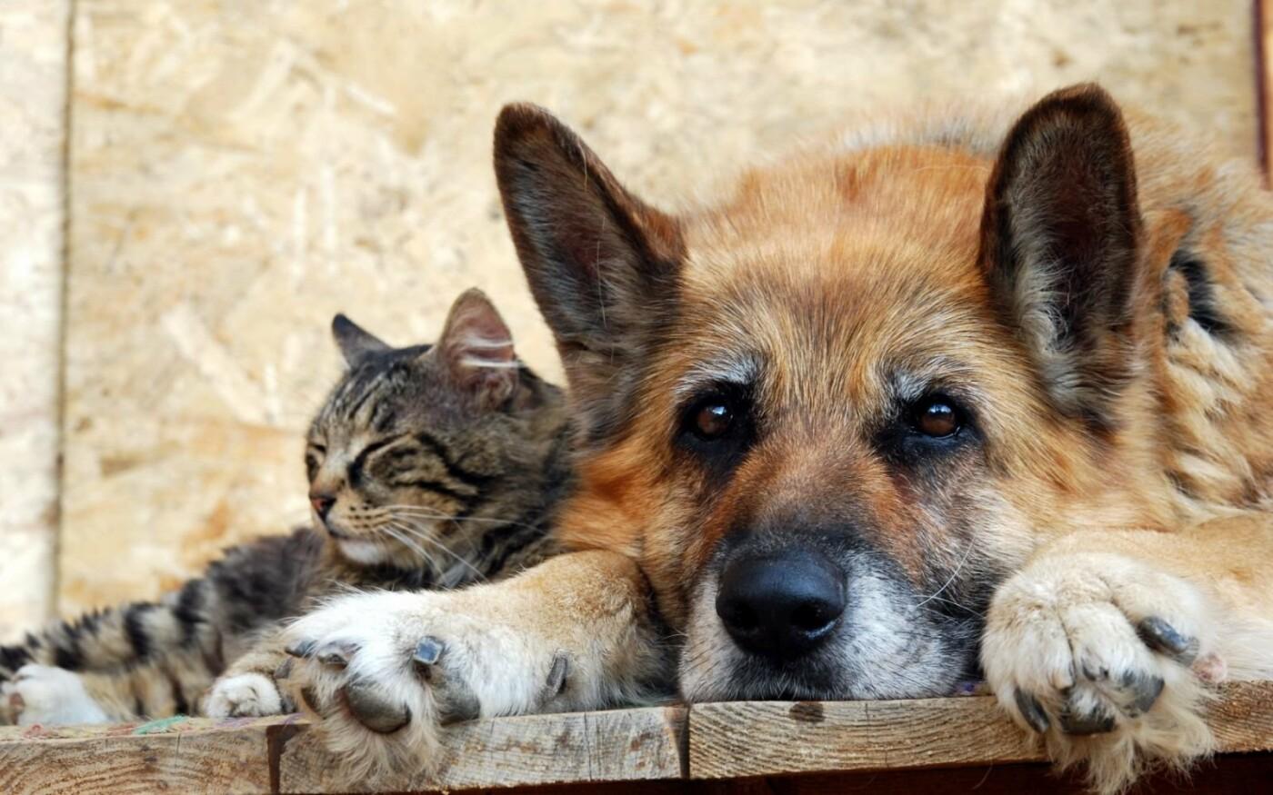 В Дружківці сьогодні почали виловлювати безпритульних тварин, фото-1