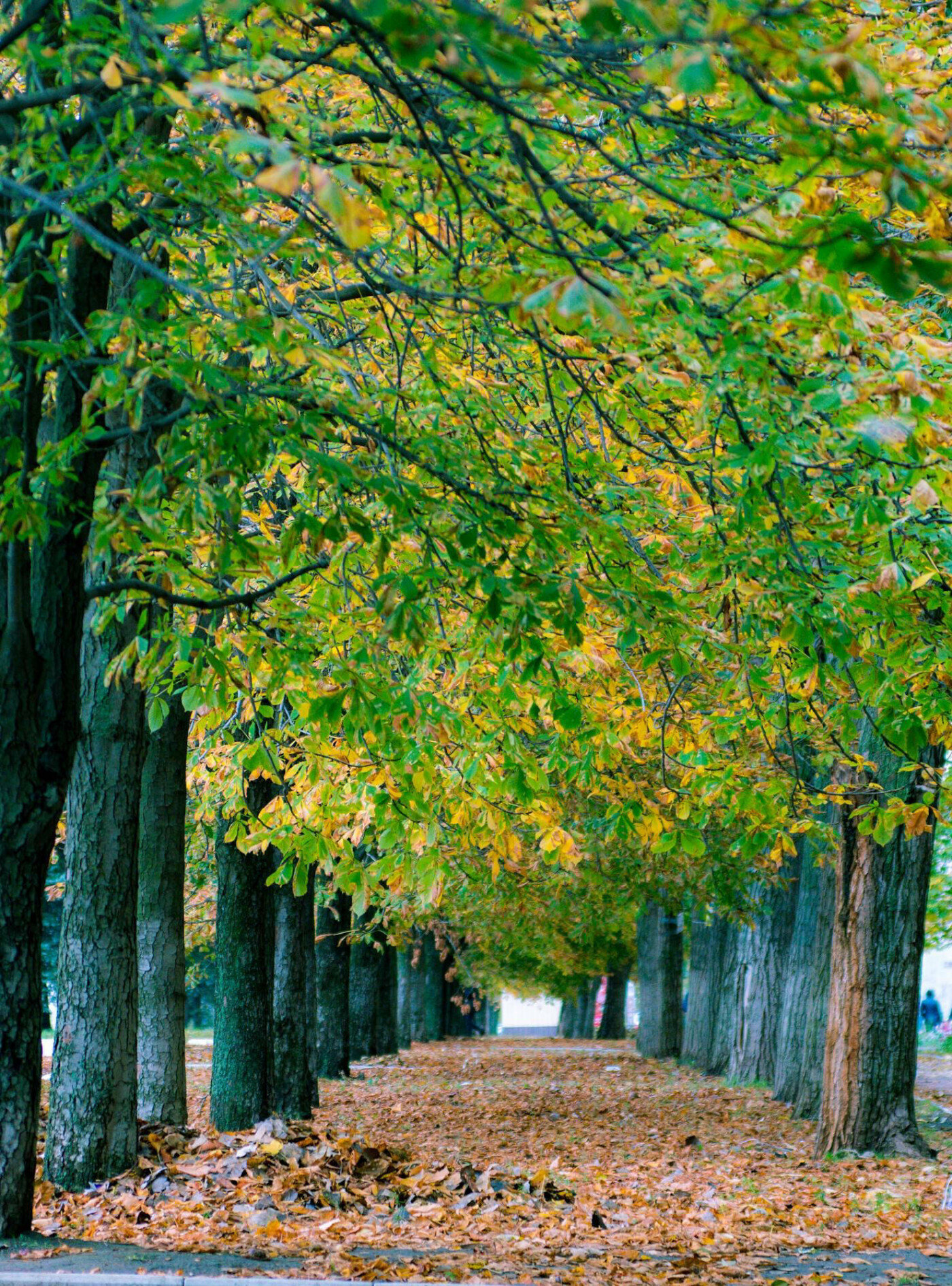 Де восени полюбляють робити фотосесії мешканці Дружківки , фото-8